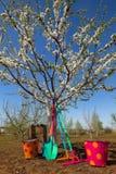 Τσουγκράνες και φτυάρι Colorfull Στοκ φωτογραφία με δικαίωμα ελεύθερης χρήσης