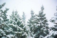 Φωτογραφία των χιονοπτώσεων και fir-trees Στοκ Εικόνες
