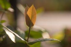Φωτογραφία φύλλων φυτού Στοκ φωτογραφίες με δικαίωμα ελεύθερης χρήσης