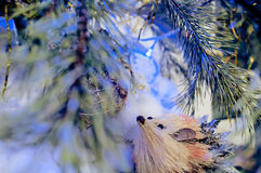 Φωτογραφία χειμερινών christmassy νεράιδων με το σκαντζόχοιρο πεύκων, χιονιού και παιχνιδιών Στοκ Φωτογραφίες