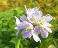 Φωτογραφία background_Macro θαμπάδων Flower_With ζουγκλών στοκ φωτογραφίες με δικαίωμα ελεύθερης χρήσης