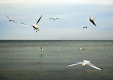 Φωτογραφία Seagulls που πετούν πέρα από το νερό ακτών Στοκ φωτογραφία με δικαίωμα ελεύθερης χρήσης