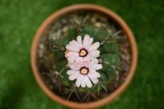 Φωτογραφίες από τα λουλούδια κάκτων το καλοκαίρι στοκ εικόνα