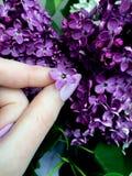 Φωτογραφίες ενός ιώδους λουλουδιού πέντε-πετάλων στοκ εικόνες