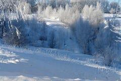 Φωτογραφίες του χειμώνα ημέρα ηλιόλουστη μπλε χιόνι στοκ φωτογραφίες με δικαίωμα ελεύθερης χρήσης