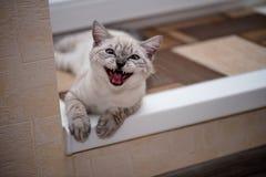 Φωτογραφίζετε; Για να χαμογελάσει; Τυρί!!! Στοκ εικόνες με δικαίωμα ελεύθερης χρήσης