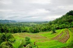φωτογραφισμένο πεζούλι ρυζιού του Μπαλί η Ινδονησία πρεσών Ινδονησία Στοκ εικόνα με δικαίωμα ελεύθερης χρήσης