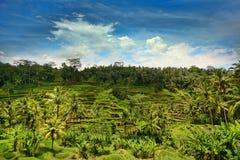 φωτογραφισμένο πεζούλι ρυζιού του Μπαλί η Ινδονησία Στοκ φωτογραφίες με δικαίωμα ελεύθερης χρήσης