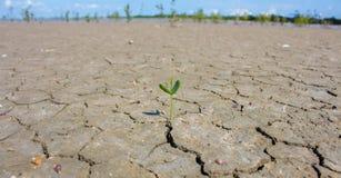 Φωτογραφιών νέες ζωής περιοχές, έννοια και ιδέες εγκαταστάσεων ξηρές για την ξηρασία στοκ εικόνα με δικαίωμα ελεύθερης χρήσης