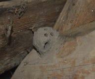Φωλιά αργίλου των σφηκών Φωλιά με τις τρύπες για να βγεί τις προνύμφες Η γήινη φωλιά των σφηκών Στοκ Φωτογραφίες
