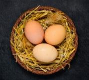Φωλιά κοτόπουλου με τα αυγά Στοκ Εικόνα