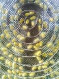 Φωλιά μεταξιού στο καλάθι κύκλων στοκ εικόνα