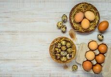 Φωλιά με τα αυγά ορτυκιών και κοτόπουλου στο διάστημα αντιγράφων Στοκ φωτογραφία με δικαίωμα ελεύθερης χρήσης