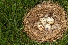 Φωλιά με τα αυγά των ορτυκιών στη χλόη στο ξύλο Στοκ φωτογραφία με δικαίωμα ελεύθερης χρήσης