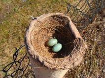 Φωλιά με τα αυγά Στοκ φωτογραφία με δικαίωμα ελεύθερης χρήσης