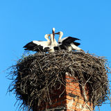 Φωλιά με τους πελαργούς Στοκ φωτογραφίες με δικαίωμα ελεύθερης χρήσης