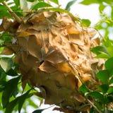 Φωλιά μυρμηγκιού Στοκ φωτογραφία με δικαίωμα ελεύθερης χρήσης