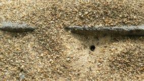 Φωλιά μυρμηγκιών στο περιβάλλον φύσης αποικία στο έδαφος 4k Uhd 25FPS άμμου φιλμ μικρού μήκους