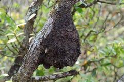 Φωλιά μυρμηγκιών Στοκ Φωτογραφίες
