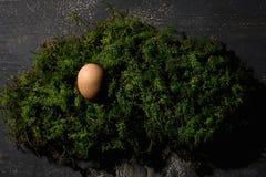 Φωλιά Πάσχας, αυγό Πάσχας στο βρύο Στοκ φωτογραφία με δικαίωμα ελεύθερης χρήσης