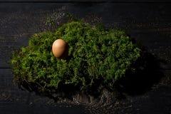 Φωλιά Πάσχας, αυγό Πάσχας στο βρύο Στοκ Φωτογραφίες