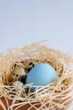 Φωλιά Πάσχας με τα ζωηρόχρωμα αυγά Στοκ εικόνα με δικαίωμα ελεύθερης χρήσης