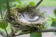 Φωλιά πουλιού - ένα συνώνυμο για ένα άνετο σπίτι, διαμέρισμα Στοκ φωτογραφίες με δικαίωμα ελεύθερης χρήσης