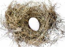 Φωλιά πουλιού στοκ εικόνες με δικαίωμα ελεύθερης χρήσης