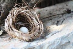 Φωλιά πουλιών με ένα αυγό Στοκ εικόνα με δικαίωμα ελεύθερης χρήσης