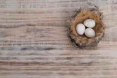 Φωλιά πουλιών με τα αυγά Στοκ φωτογραφίες με δικαίωμα ελεύθερης χρήσης