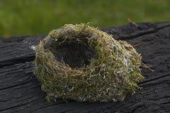 φωλιά πουλιών μικρή Στοκ εικόνα με δικαίωμα ελεύθερης χρήσης