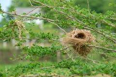 Φωλιά στο δέντρο Στοκ φωτογραφίες με δικαίωμα ελεύθερης χρήσης