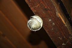 Φωλιά σφήκας Στοκ Εικόνες
