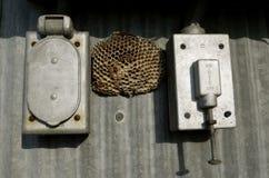 Φωλιά σφηκών μεταξύ των ηλεκτρικών κιβωτίων Στοκ Φωτογραφία
