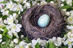 Φωλιά της Robin με το μπλε αυγό και τα λουλούδια Στοκ Εικόνες