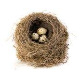 Φωλιά του αρχικού πουλιού με την κινηματογράφηση σε πρώτο πλάνο αυγών ορτυκιών που απομονώνεται σε ένα άσπρο υπόβαθρο Στοκ Φωτογραφία