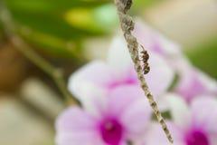 Φωλιά υμενόπτερων, εντόμων και σφηκών Στοκ εικόνες με δικαίωμα ελεύθερης χρήσης