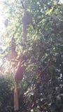 φωλιά Στοκ φωτογραφία με δικαίωμα ελεύθερης χρήσης