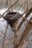 φωλιά s πουλιών Στοκ φωτογραφίες με δικαίωμα ελεύθερης χρήσης