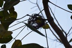 φωλιά s πουλιών Στοκ φωτογραφία με δικαίωμα ελεύθερης χρήσης