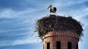 Φωλιά Storck Στοκ φωτογραφία με δικαίωμα ελεύθερης χρήσης
