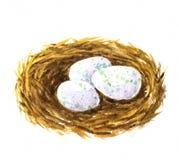 Φωλιά Watercolor με τα αυγά ελεύθερη απεικόνιση δικαιώματος