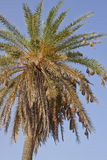 Φωλιές δέντρων στοκ εικόνες με δικαίωμα ελεύθερης χρήσης