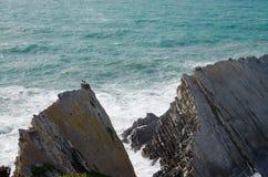 Φωλιές πελαργών στην κορυφογραμμή πέρα από τον ωκεανό στοκ εικόνες