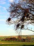 Φωλιές πουλιών ενάντια στο καλλιεργήσιμο έδαφος στοκ εικόνες με δικαίωμα ελεύθερης χρήσης