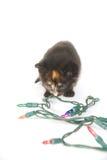Φω'τα γατακιών και διακοπών Στοκ εικόνες με δικαίωμα ελεύθερης χρήσης