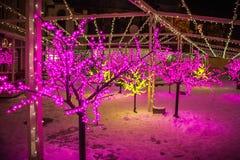 Φω'τα διακοσμήσεων Χριστουγέννων στα δέντρα Στοκ εικόνα με δικαίωμα ελεύθερης χρήσης