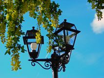 Φω'τα και δέντρο Στοκ Εικόνες