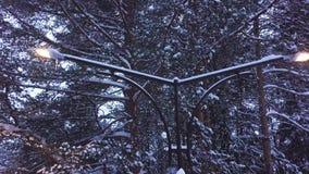 Φω'τα λαμπτήρων οδών στο χιόνι ενάντια στο δασικό συνδετήρα Τοπ άποψη του διπλού φωτίζοντας χιονιού φαναριών στο υπόβαθρο απόθεμα βίντεο
