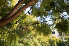 Φω'τα σειράς που κρεμούν σε ένα δέντρο Στοκ Εικόνες